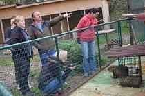 V Zeleném Vendolí se starají o opuštěná zvířata. Psí útulek potřebuje zastřešit, aby psi v zimě netrpěli. Významný příspěvek z aukcí ze srdce pomůže. Členky sdružení si celou stanici prohlédly.