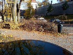 PODZIM je ve znamení prořezávání stromů. V Litomyšli se jednalo o práce v patnácti lokalitách. Vříjnu arboristé například prořezali  24 stromů vparku pod muzeem.