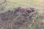 Pozůstatky po větrné smršti na Boleslavsku