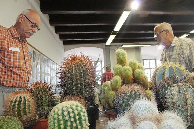 Výstava kaktusů a sukulentů.