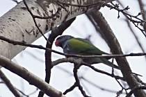 Papoušek z lesoparku Štěpánka.