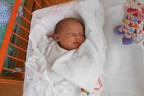 BERENIKA Nováková se narodila 25. listopadu s mírami 3,51kilogramů a 49 centimetrů. S maminkou Martinou a tatínkem Milošem bude bydlet v Nové Telibi, kde už se na ni těší bráška Matyáš.