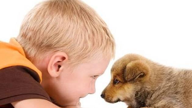 Jak uchránit psa před dělobuchy?