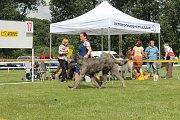 O víkendu se na Krásné louce v Mladé Boleslavi uskutečnila Národní výstava psů.