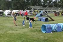 V sobotu 22. června se kynologický areál na Krásné louce zaplnili psi všech možných ras a jejich lidského doprovodu.