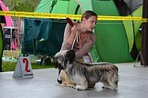Výstava psů na Krásné louce