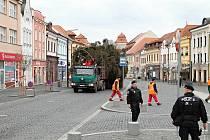 Vánoční strom z Kosmonos zamířil v pátek do Mladé Boleslavi.