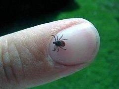 Klíště je malé stvoření, ale umí napáchat velké škody