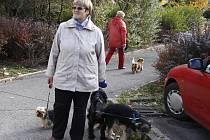 V Mladé Boleslavi žijí stovky psích mazlíčků - ilustrační foto