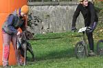 Psí spřežení táhnoucí koloběžky, kola i trojkolky se proháněla Štěpánkou.