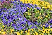 Poznáte kde rozkvetly květy?