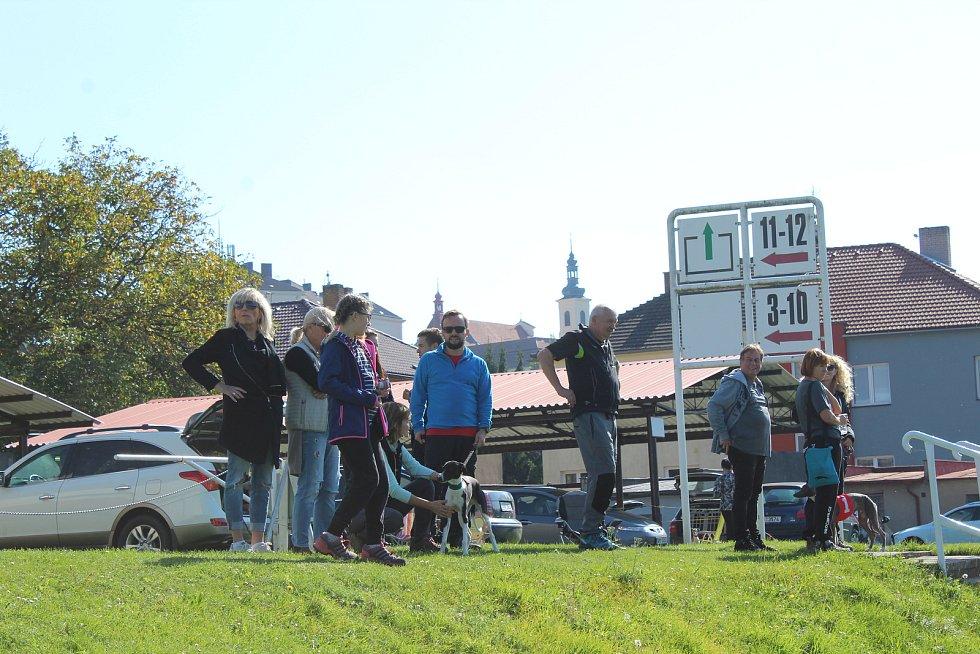 Závody chrtů v Mladé Boleslavi