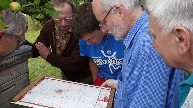 Včelaři zkoumají měl usazenou na podložce umístěné na dně úlu.