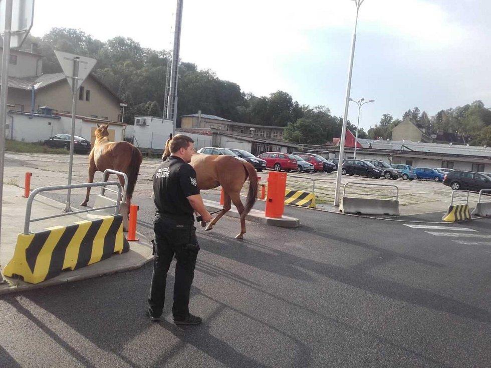 Koně strážníci chytali v ulicích Boleslavi