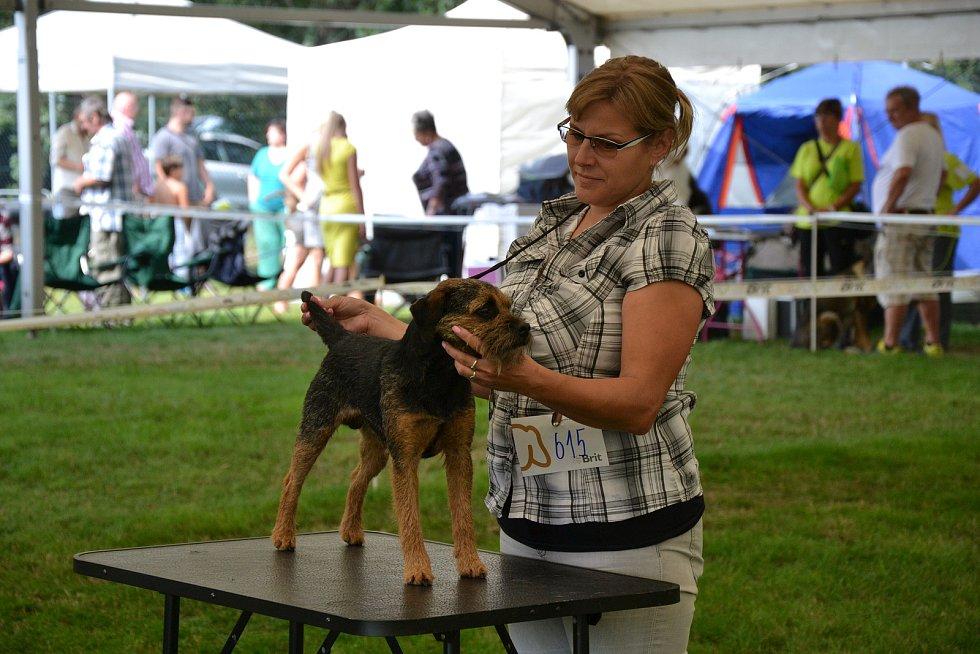 Výstava psů se konala na Krásné Louce v Boleslavi.