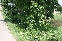 Větve ovocných stromů hnijící v příkopě