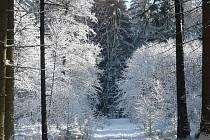 Do Česka se chystá extrémní mráz