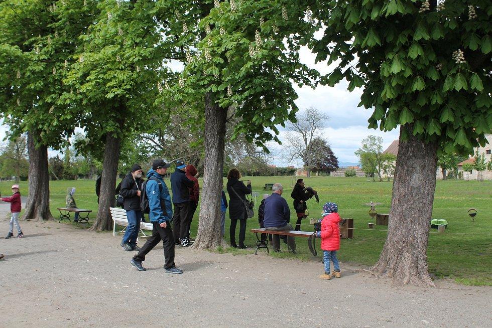 Na zámku v Mnichově Hradišti byla k vidění komentovaná výstava dravců s názvem Sokolník a jeho dravci.