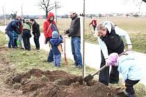 Hradišťáci adoptovali dvě stě stromů. Podél silnice na Podolí je sázel dvojnásobek.