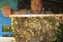 Leoš Dvorský je zastáncem časté obměny včelího díla. Staré plásty se totiž mohou časem stát zdrojem nemocí.