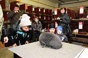 Chovatelská výstava drůbeže, králíků a holubů v Dobrovici
