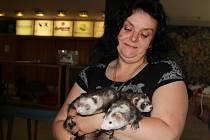 UMISŤOVACÍ VÝSTAVA koček a fretek v Mladé Boleslavi