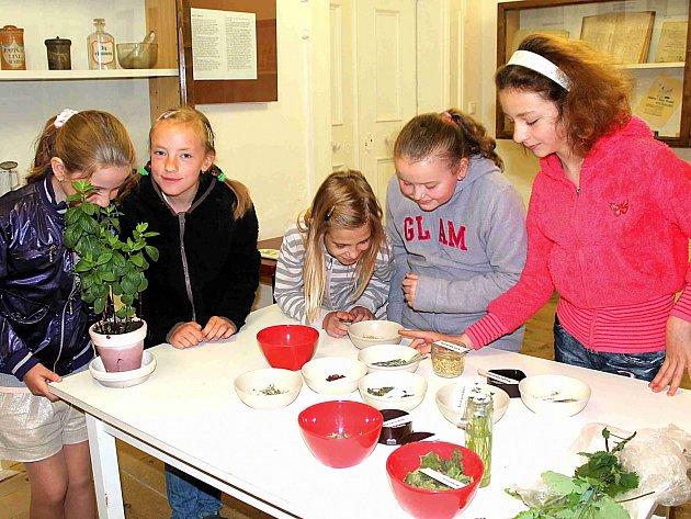 ČTVRŤAČKY Anežka, Tereza, Veronika, Eliška a Zuzka (zleva) právě v lékárně zkoumají různé druhy bylinek a koření. Podle čichu poznaly například mátu, šípek či květ bezu.