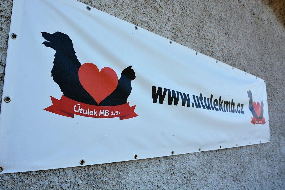 V útulku v Mladé Boleslavi se ocitlo od březnového otevření 14 zvířat.