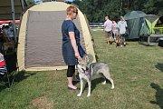 Česká národní výstava psů na mladoboleslavské Krásné louce hostila o víkendu stovku plemen čtyřnohých miláčků.