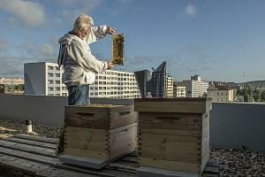 Chov včel na střeše Bondy, Jiří Šturma.