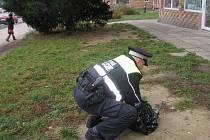 Městská policie při odchytu polomrtvého holuba.