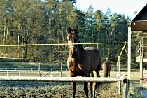 Jiřina Knížková při své procházce vyfotila koně v jezdeckém areálu Páterov