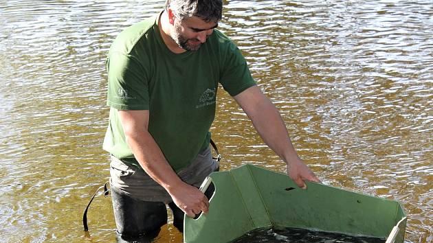 Rybáři do revírů na Jizeře nasadili lipana podhorního.