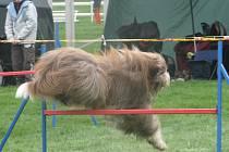Psi mnoha plemen na Krásné louce v doprovodu svých páníčků zdolávali nejrůznější překážky v psím parkuru.