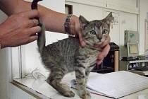 Malé kotě, které někdo vyhodil za jízdy z auta.