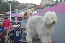 Víkend v Mladé Boleslavi patřil majitelům a fanouškům psů nejen z České republiky, ale i z několika dalších evropských zemí.