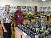Více jak dva a půl tisíce kaktusů a sukulentů mohou obdivovat návštěvníci mladoboleslavského hradu ve výstavním sále okresního archivu.
