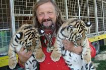 Jaromír Joo se sedmitýdenními tygřími mláďaty.
