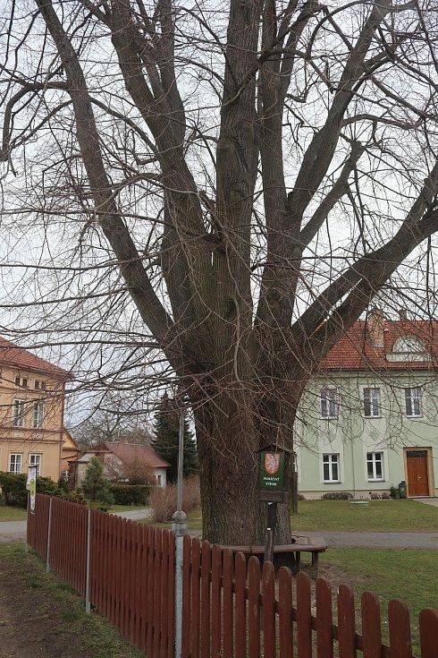 Sudoměř - památný strom.