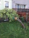 Vyvrácený strom v Mladé Boleslavi.
