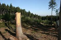 Na Chlum přijela těžká technika, která likviduje stromy napadené kůrovcem.