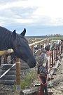 V Kobylnicích u Mladé Boleslavi na ranči U kulhavého velblouda se konal již druhý ročník Cross country hobby trail.