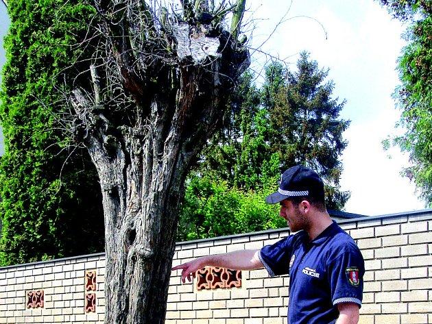 Jeden z uhynulých stromů v Palackého ulici.