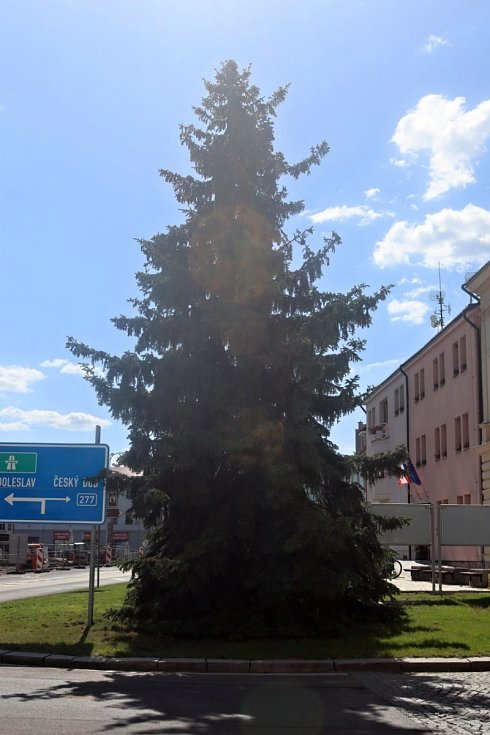 Vánoční smrk v Mnichově Hradišti šel k zemi.