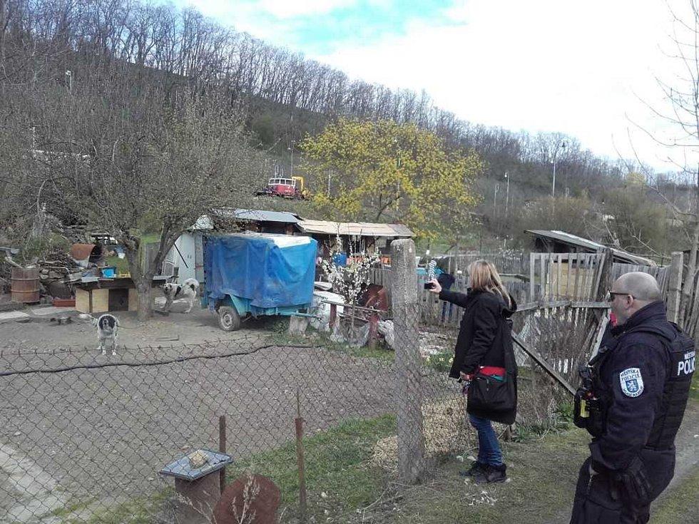 Asistence u domnělého týrání psů