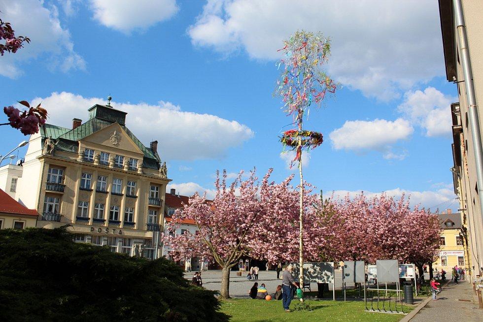 Májka na náměstí v Mnichově Hradišti.