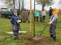 Sázení stromů u Hněvousic.
