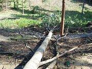 Padající strom zničil oplocení v lese