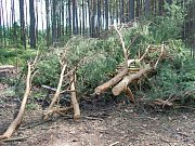 Polomy a vývraty v lesích u Bělé pod Bezdězem