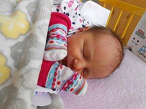 miminka 46. týdne 2017